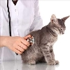 Ветеринарные клиники в Иловле